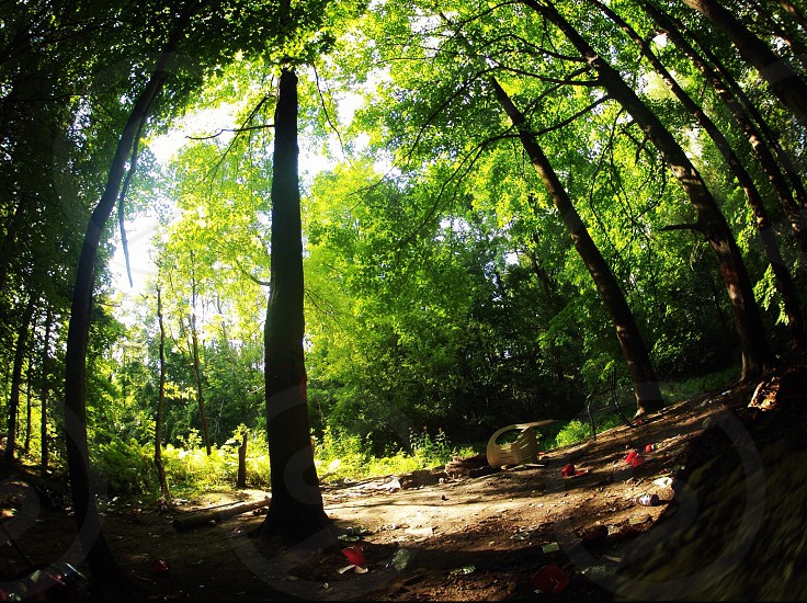 fish-eye photography of trees photo