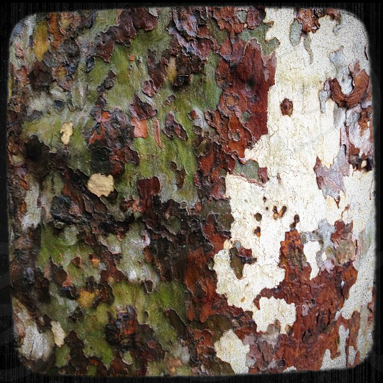 Beautiful multi-colored wet tree bark photo