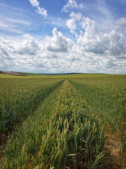 Looking across a wheat field in Berkshire UK. photo