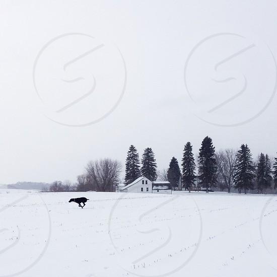 black short coat dog running on snow field photo