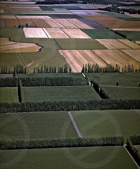Agricultural land on Ryer Island in the California Delta the west's largest estuary that provides water for 23 million Californians. photo
