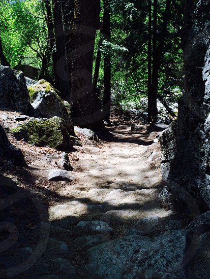 view of rocky trail on the forest photo