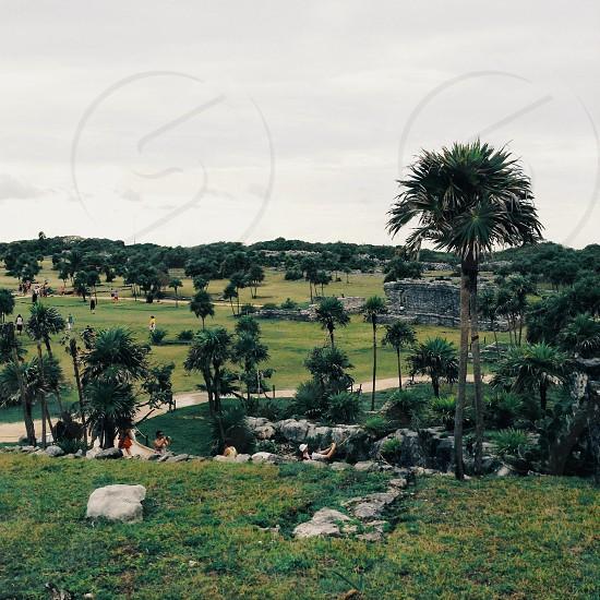 green palm trees photo