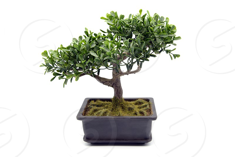 potted bonsai tree at white isolated background. made of plastic. photo