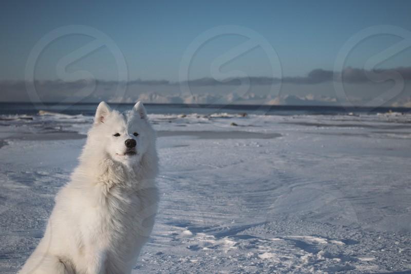 winter polar dog in the arctic mountain cabin snow windows cabin hut north pole photo