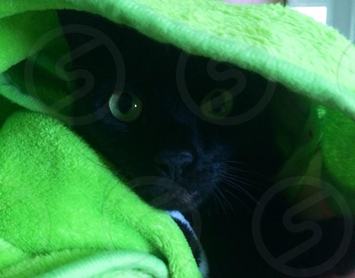 Black cat.  photo