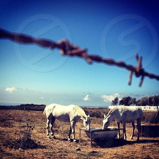 Tarifa Andalusia photo