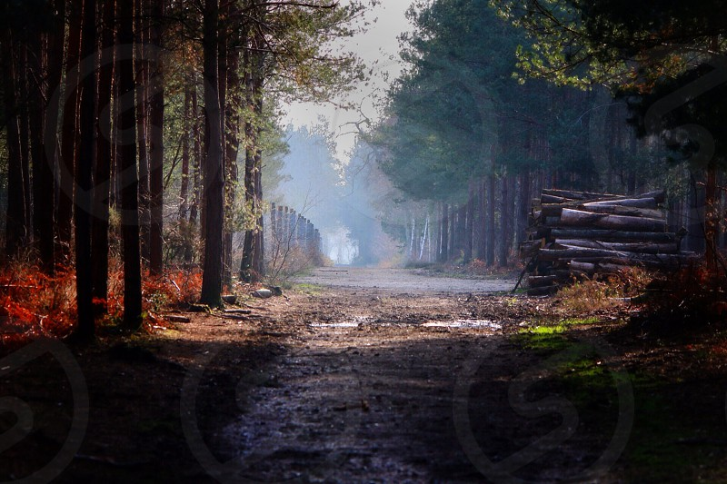 view of forest and trees photo