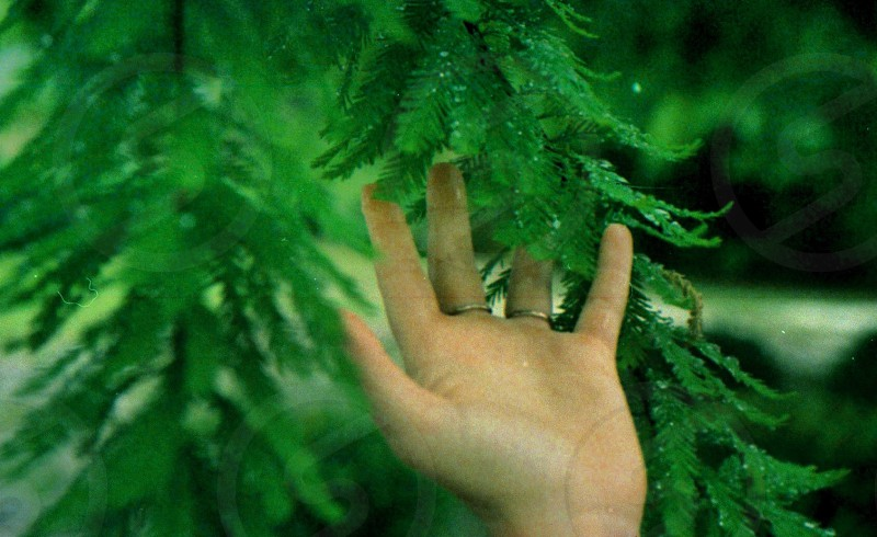 person wearing silver band rings touching green tree leaves photo