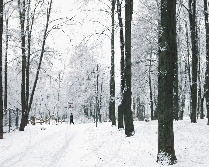 person walking on white snow between bare trees during daytime photo