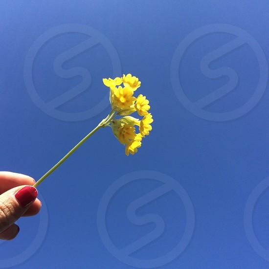 woman holding yellow flower photo