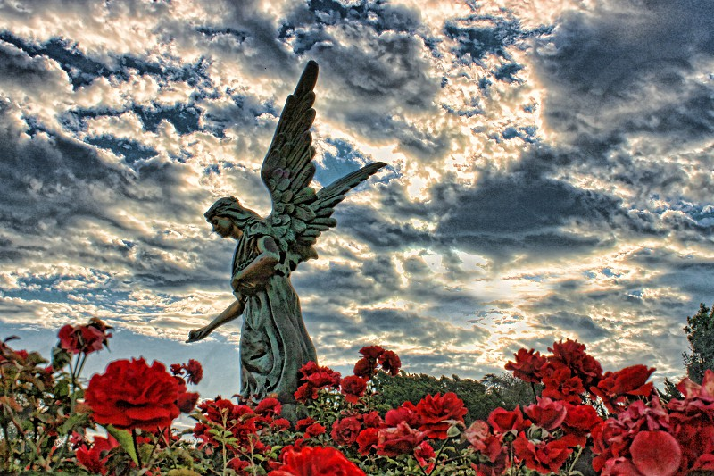 Angel statue standing in red roses against a back lit cloudy sky. photo