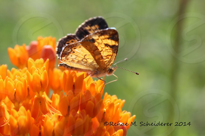 Summer butterfly photo