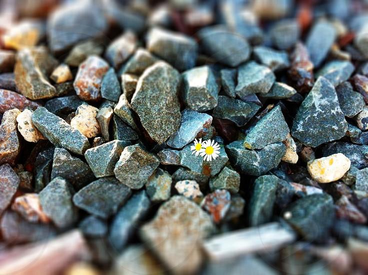 gray pebble photo