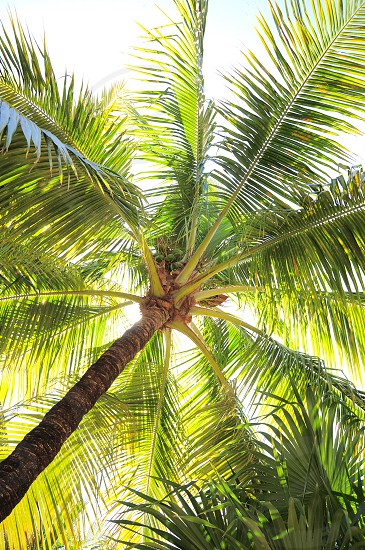 coconut tree during daytime photo