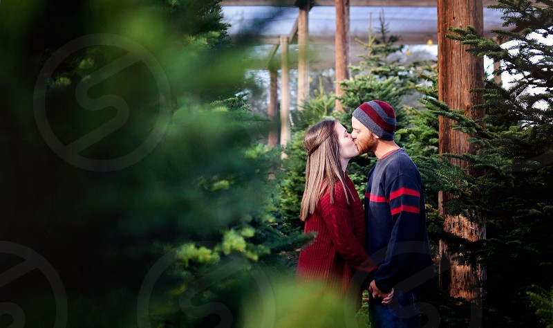 Couple in a Christmas tree lot kissing photo