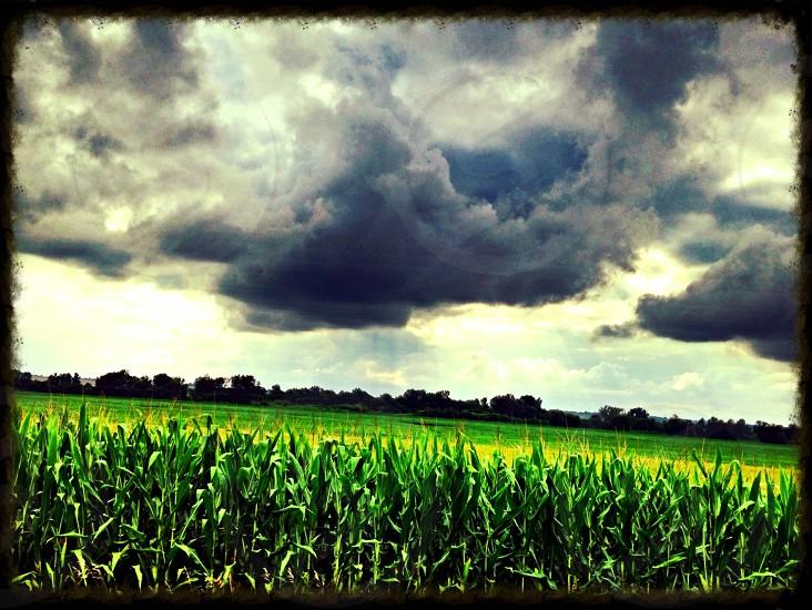 Cornfield sky sunset farmland crops farmer scenic photo