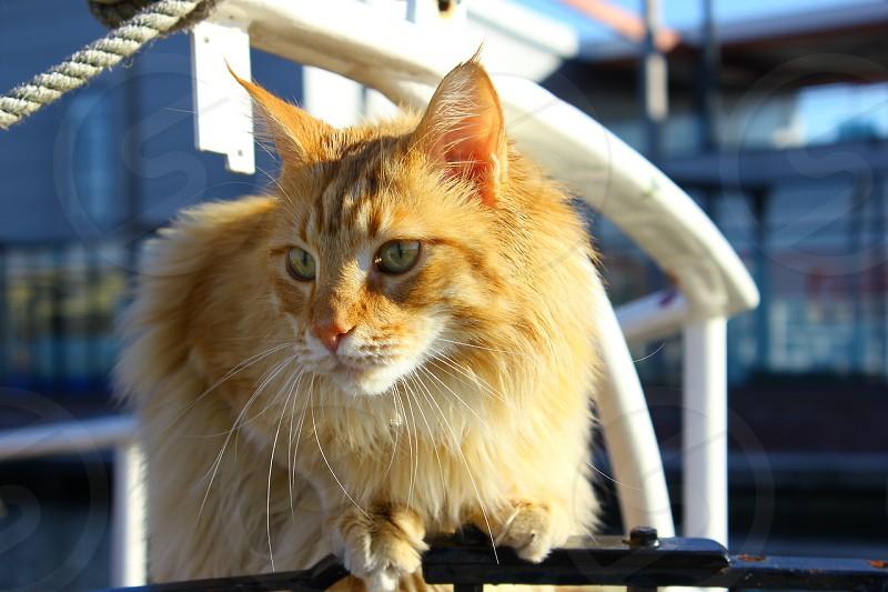 Cat -Groningen Netherlands photo
