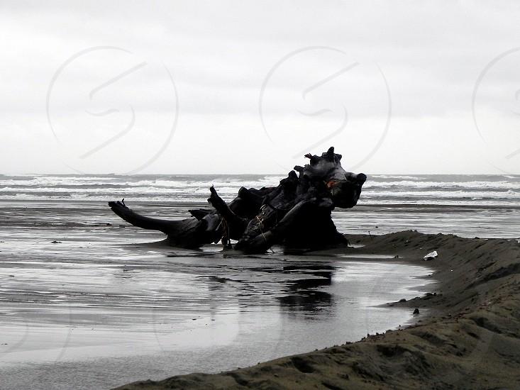 Dino On The Beach In Westport Wa photo