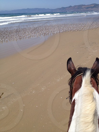 View of the ocean from horseback. photo