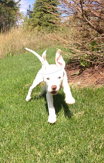 Jumping puppy photo