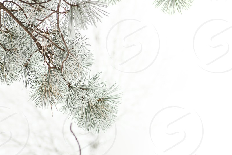view of white leaves photo