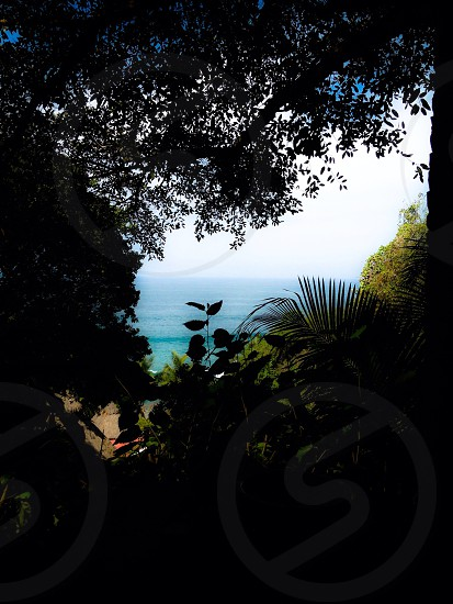 'Jungle to Pacific' Sayulita Mexico photo