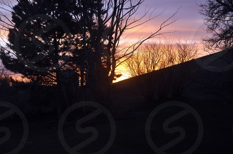 sunset over hills behind tree photo
