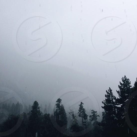 fog over pin trees photo