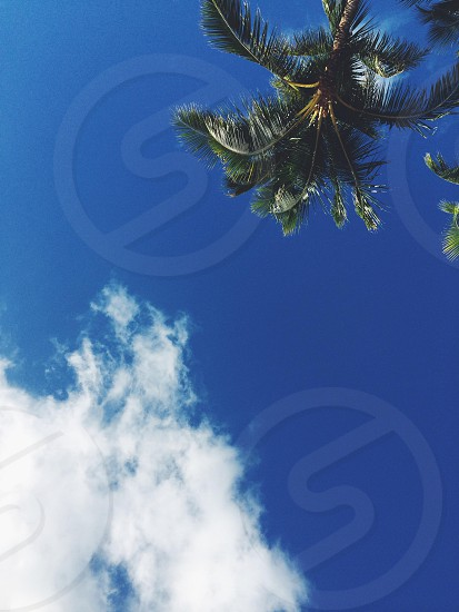 Hawaii Honolulu blue sky clouds palm tree  photo