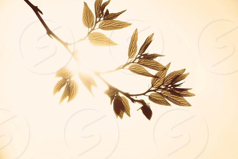 Leaf light photo