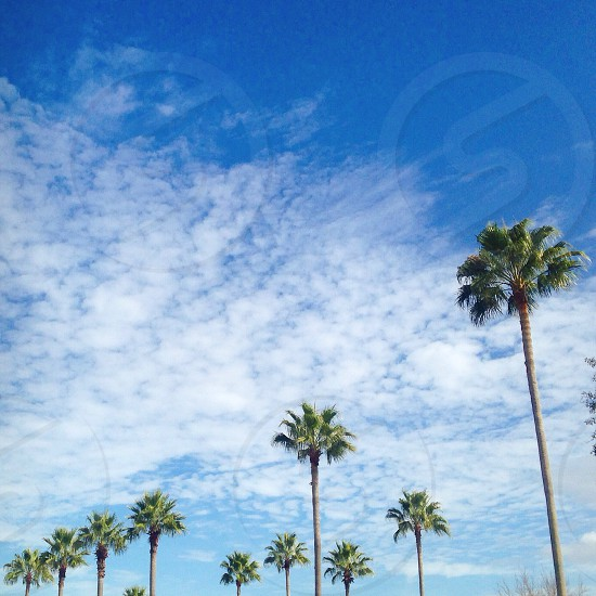 green palm trees under white clouds photo