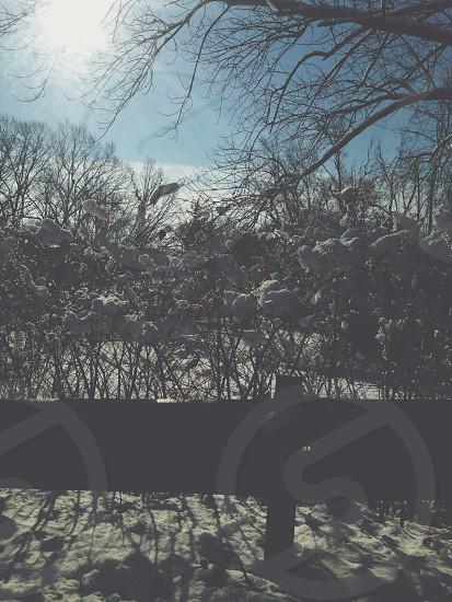 Winter Mix.  photo