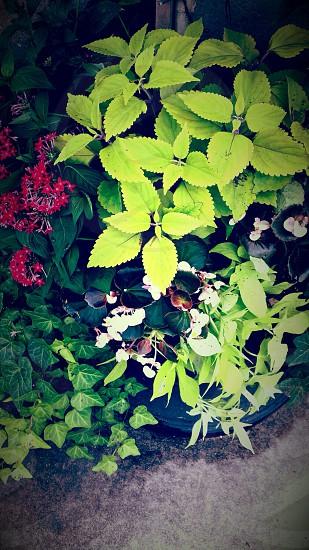 red santan flower beside green leaf plant photo