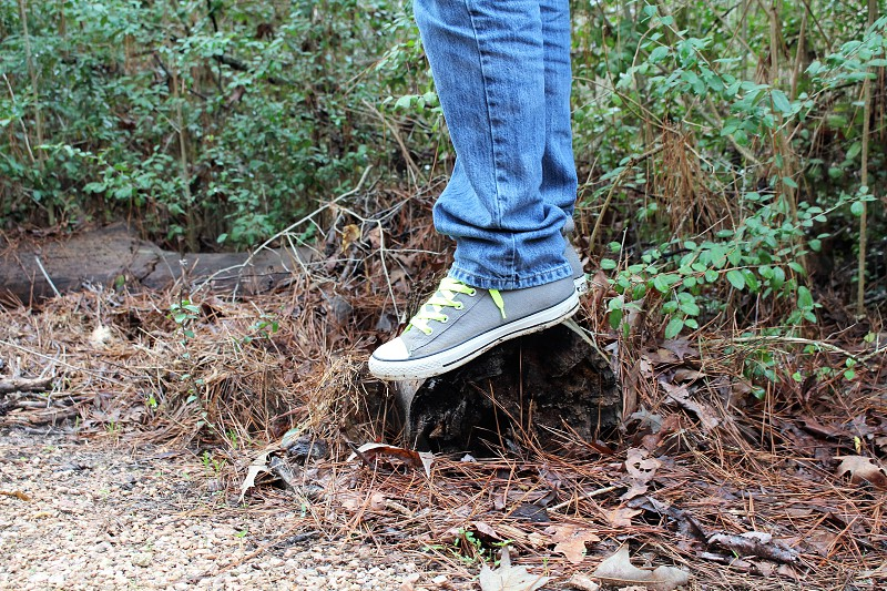 Nature  trunk  shoes photo