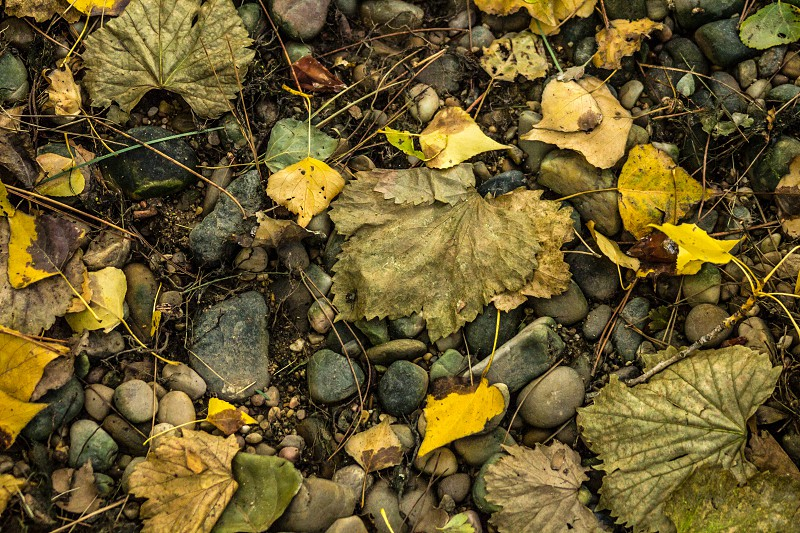 Leaves on the ground. photo