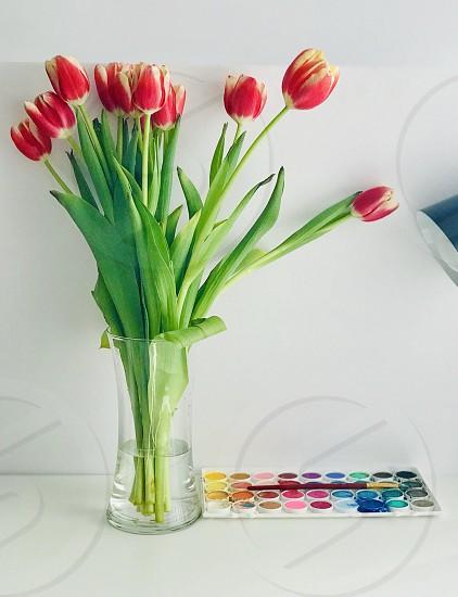 Vibrant colors flowers pallet photo