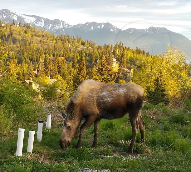 Alaska Living photo