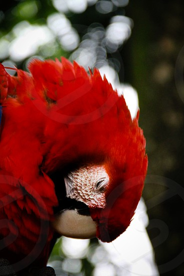 Macaw's bird photo