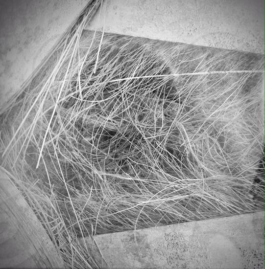Palm fur photo