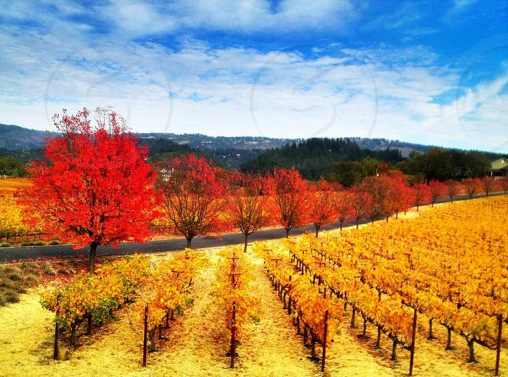 Napa valley ca photo