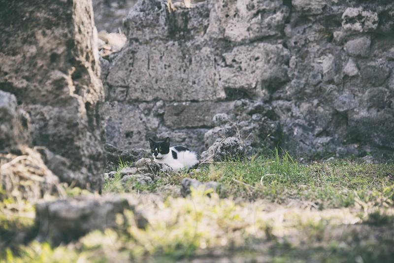 ポンペイ遺跡と猫 photo
