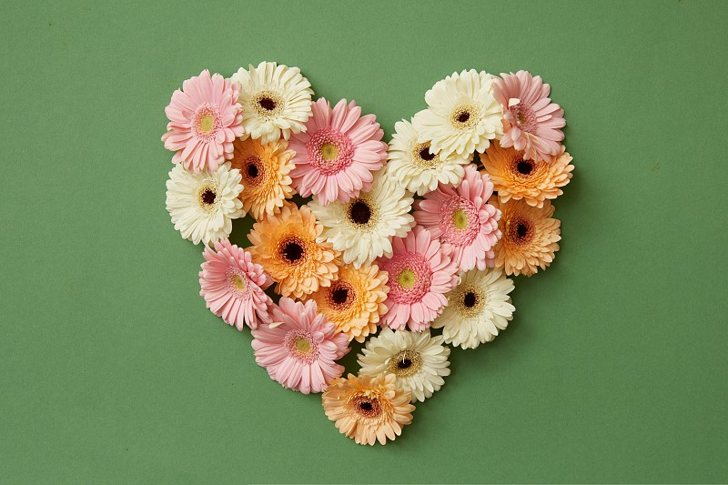 Heart made from fresh gerbera flowers on a green background. St. Valentine's Day flat lay copy space photo
