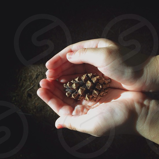 brown conifer cone on hand photo
