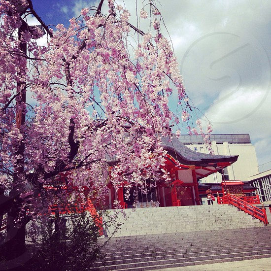 JapanShinjukutempleTokyo photo