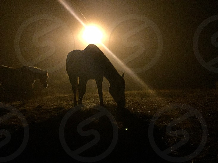 two horses on grass field photo