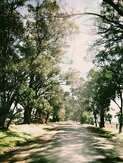Country road in Australia with eucalyptus (gum) trees lining road photo