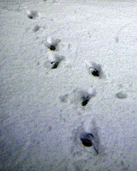 Footprints in snow black and white photo
