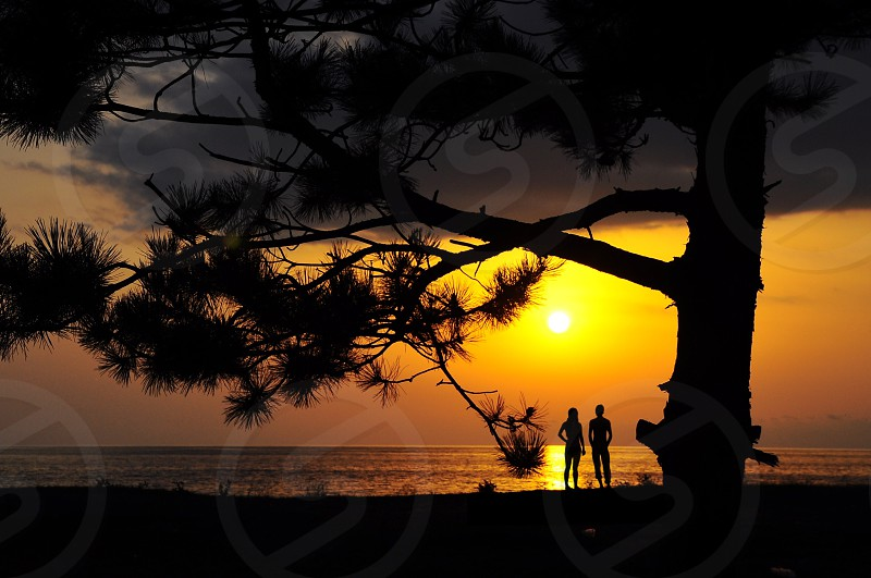 couple standing underneath tree silhouette photo