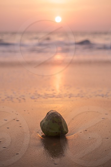 A lonely coconut enjoying the sunset photo